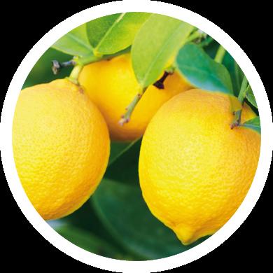 limoni-circle_section2