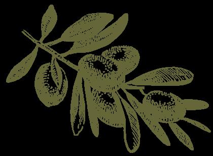 Olive biologiche Siciliane