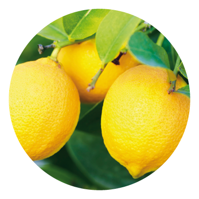 Limoni biologici Femminello
